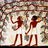 grapes in egypt preview The Historical Accuracy of the Bible Revealed