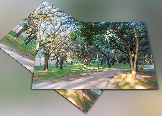 Pathway Green Trees